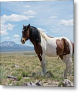 In All His Splendor Metal Print by Nicole Markmann Nelson