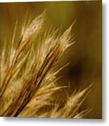 In An Autumn Field - Golden Macro Metal Print