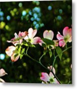 In Another Spring 2013 002 Metal Print