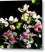 In Another Spring 2013 004 Metal Print