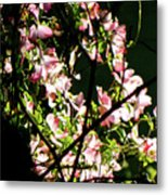 In Another Spring 2013 005 Metal Print