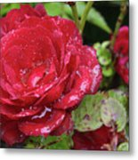 In Love With Rain Metal Print