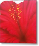 In My Garden 27 Metal Print