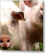 In Pig Times And Bad Times We Will Always Be Together  Metal Print