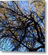 In Sunlight And In Shadow Metal Print