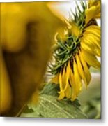 In The Background Metal Print
