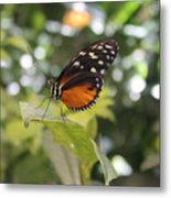 In The Butterfly Room At The Insectarium Metal Print