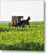 In The Corn Metal Print