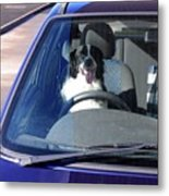 In The Driving Seat Metal Print