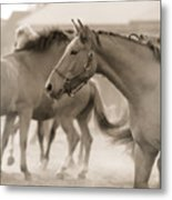 In The Dust Metal Print