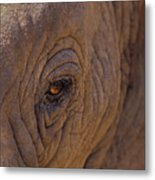 In The Eye Of The Elephant Metal Print