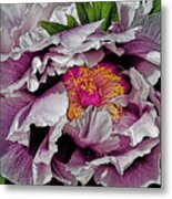 In The Eye Of The Peony Metal Print