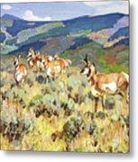 In The Foothills - Antelope Metal Print