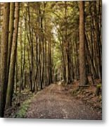 In The Forest Cathedral  Metal Print