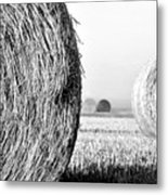 In The Hay -black And White Metal Print