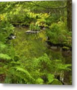In The Heart Of The Forest Metal Print