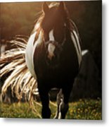 In The Last Rays Of Setting Sun Metal Print