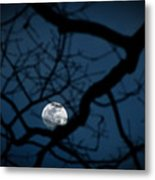 In The Light Of Night Metal Print
