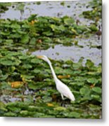 In The Lily Pads Metal Print
