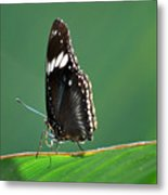 In The Limelight Metal Print