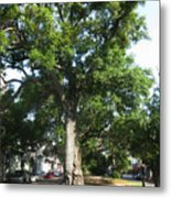 In The Neutral Ground Metal Print