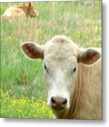 Posing In The Pasture Metal Print
