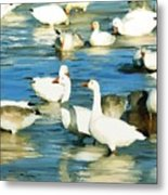 In The River  Metal Print