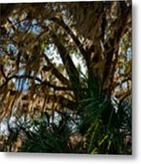 In The Shade Of A Florida Oak Metal Print