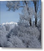In The Shadows Of The Fog Metal Print