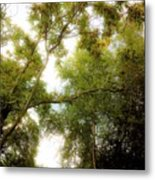 In The Summer Time When The Weather Was Fine Metal Print