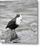 In The Water  Metal Print