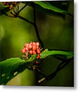 Vermont---in The Wild Metal Print
