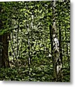 In The Woods Wc Metal Print