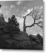 In Time There Is Motion Black And White  Metal Print by James Steele