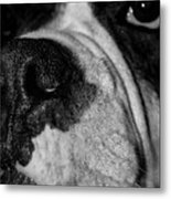 In Your Face II Metal Print by DigiArt Diaries by Vicky B Fuller