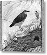 India: Water Ouzels Metal Print