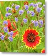 Indian Blanketflowers Gaillardia Puchella Metal Print