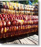 Indian Corn On The Cob Metal Print