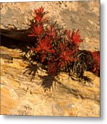 Indian Paint Brush Metal Print