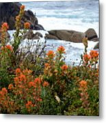 Indian Paintbrush At Point Lobos Metal Print