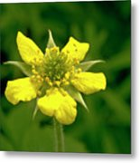 Indian Strawberry Flower Metal Print