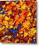Indian Summer ... Metal Print