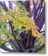 Indian Tree Metal Print