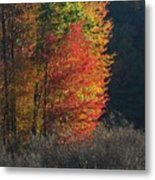 Indiana Colors Metal Print