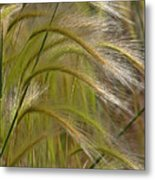 Indiangrass Swaying Softly With The Wind Metal Print