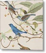 Indigo Bird Metal Print