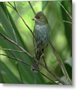 Indigo Bunting - Felts Nature Preserve - Ellenton Florida Metal Print