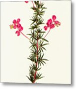 Indigo Plant Metal Print