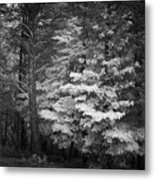 Infared Photograph Metal Print