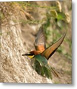 Inflight Feeding Bee Eater Metal Print